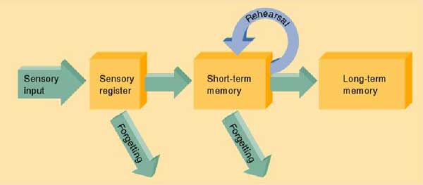 moving spanish content to long term memory
